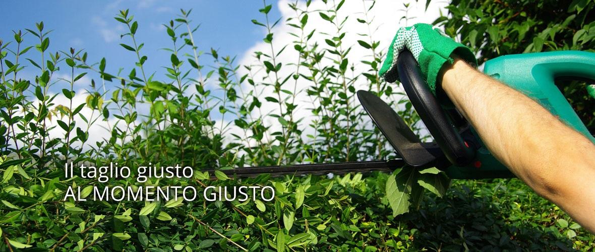 taglio siepi giardiniere padova venezia2